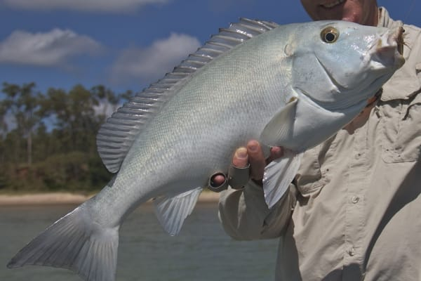 'Blue bastard': Science gets hooks into mystery fish