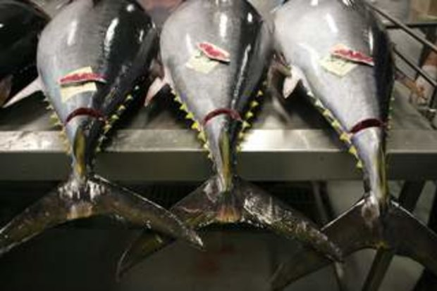 Aquaculture industry hopes to cash in on world demand for fish