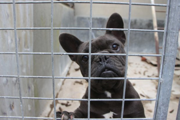 Pet industry's top dogs overlooked puppy factory cruelty