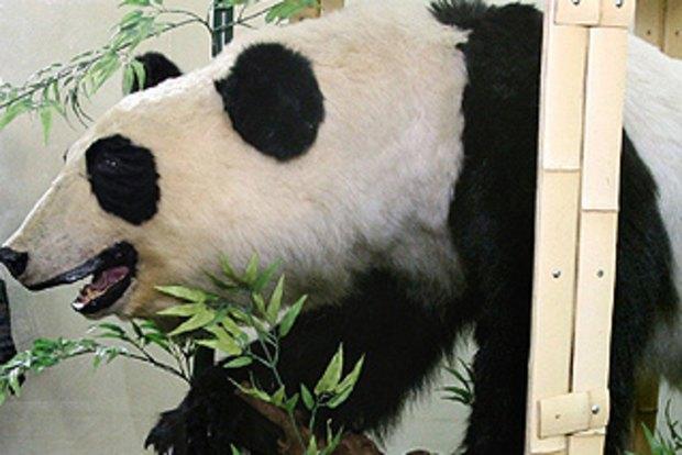 Man held over stuffed panda trade in Tokyo