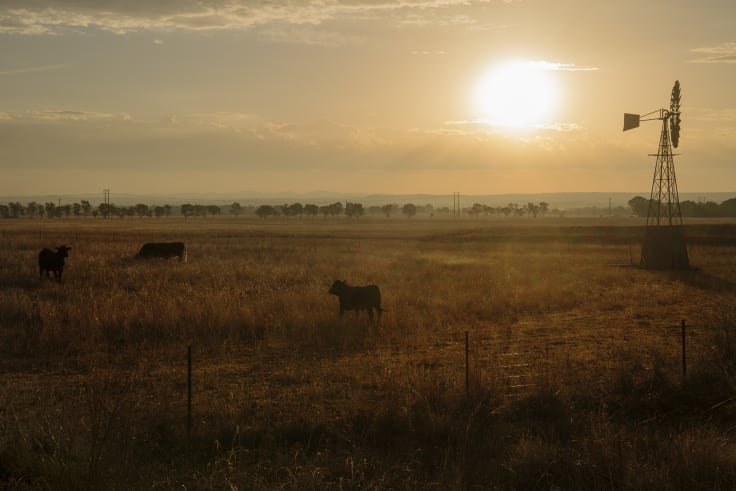 Most projects using the methods under review involve regrowing native forest on grazing land.