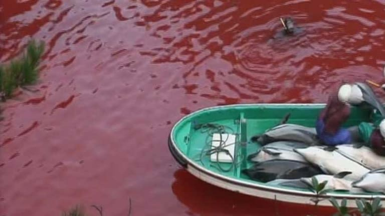 A scene from the documentary <i>The Cove</i>.