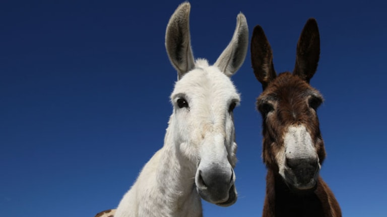 Wal-Mart China says it will step up testing after traces of fox DNA was found with donkey meat.