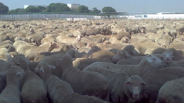 Australia is the most significant exporter of agricultural animals and heat stress has been identified as a significant factor contributing to high mortality in some live export voyages.