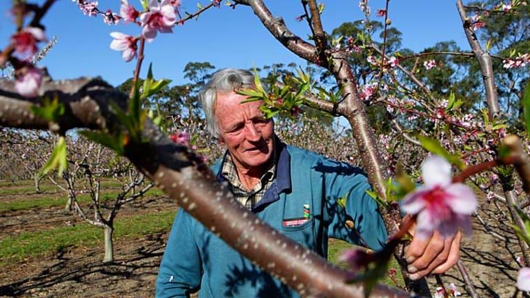Tough: Warren Rowles at his Glenorie farm.