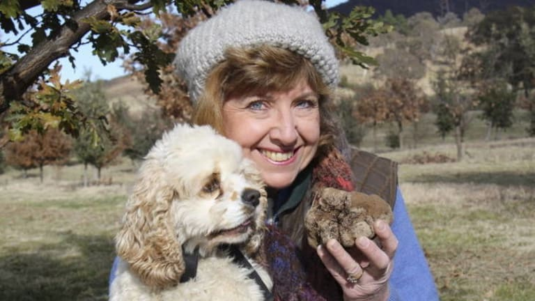 Canberra truffle grower  Sherry McArdle-English with truffle-hunting dog Snuffle and a 444g truffle they found on May 10 - a good start.