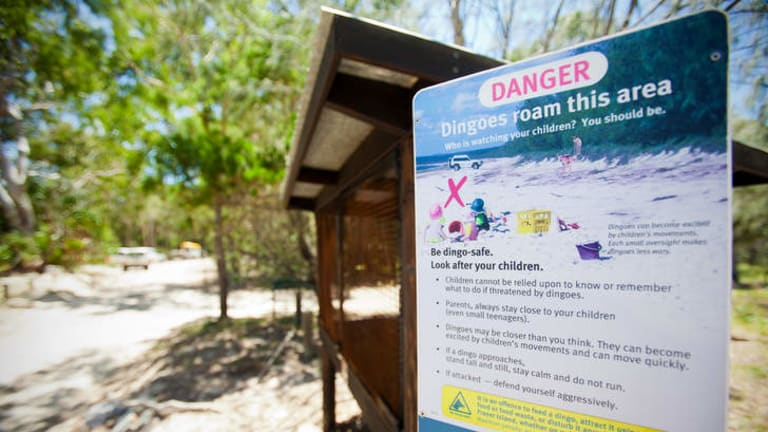 Read all about it … signs warn visitors to Fraser Island of the dangers posed by dingoes.