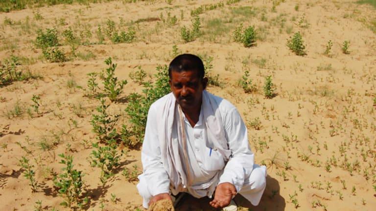 Farmer Chatan Singh and his failed crop.