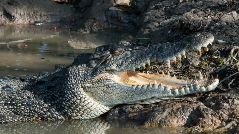 Attack... a brave India mother 'bats croc to save daughter' while washing clothes in the river.