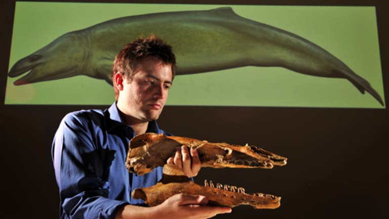Dr Erich Fitzgerald with the 25 million year old skull and jawbone fossil.