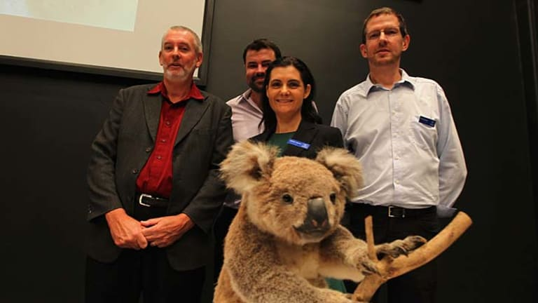"""Genetic win: Professor Peter Timms, far left, with Adam Polkinghorne, Dr Rebecca Johnson and Mark Eldridge, says it was """"only right"""" his team won the global race to diagnose and treat diseases threatening to wipe out koalas."""