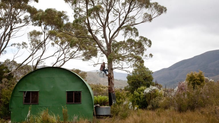 Dejan Stojanovic checks an active orange-bellied parrot nesting box by a historic bushwalkers' hut at Melaleuca.