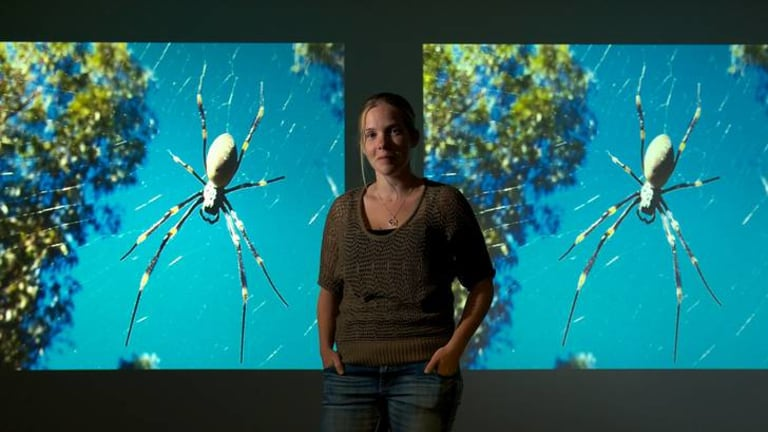 Lizzy Lowe has found spiders enjoy the conditions available to them in cities and it is helping their development.