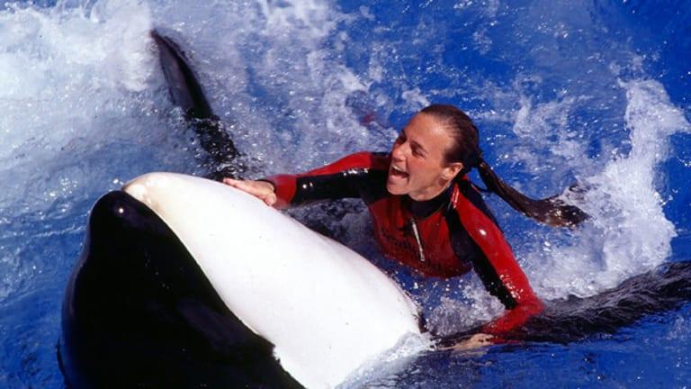 Killed by a whale ... Dawn Brancheau.