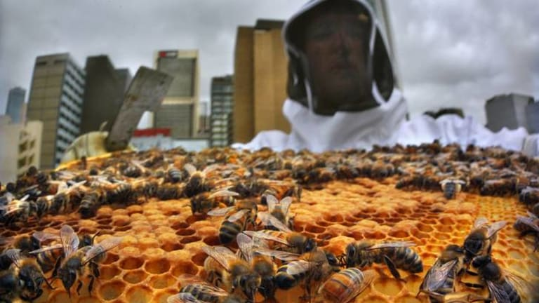 Mat Lumalasi and Vanessa Kwiatkowski have pioneered Melbourne City Rooftop Honey, now at Federation Square.