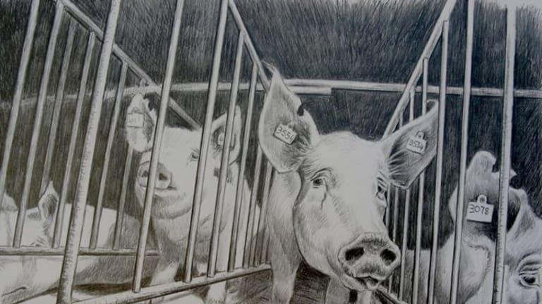 Factory Farming: Industrialised Cruelty, by Jo Frederiks.