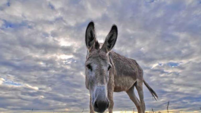 One of the donkeys at the Tongala shelter.
