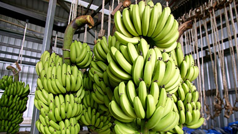 Not pretty enough ... bananas on a Queensland plantation.