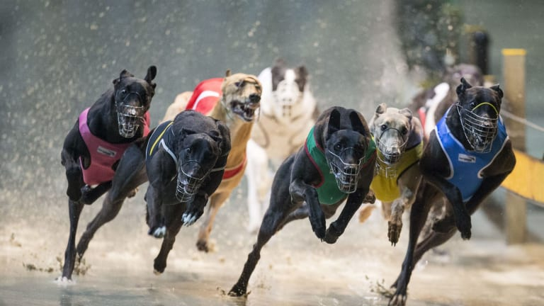 Greyhound racing has been banned in NSW.