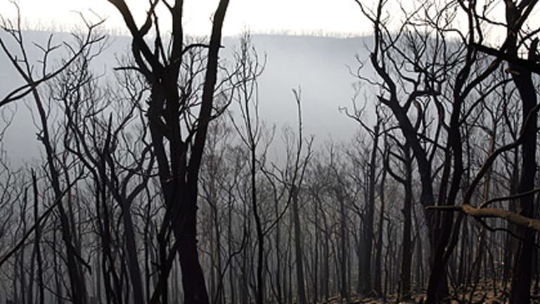 The landscape near Kinglake, which was devastated by the Black Saturday fires.