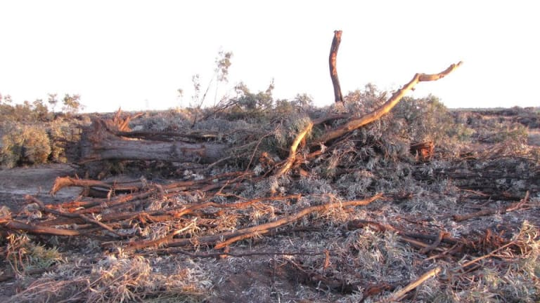 Land clearing at Croppa Creek, NSW.