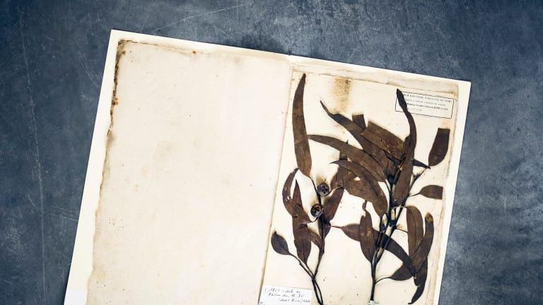 Some of the specimens destroyed by Australian officials.