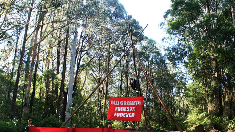 Protesters blockade the road into the Kuark forest in East Gippsland.