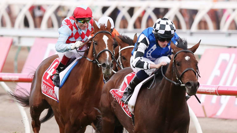 Overshadowed: Protectionist's win in the 2014 Melbourne Cup was overshadowed by the death of two horses in the race.