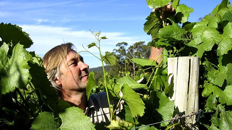 Owner-grower Alan Cooper checks the vines at his Cobaw Ridge winery.