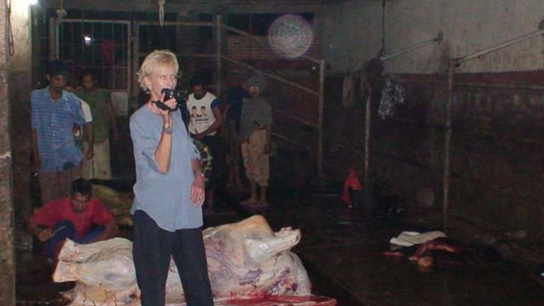 Horrific images ... Lyn White films workers with an animal carcass at an Indonesian abattoir.