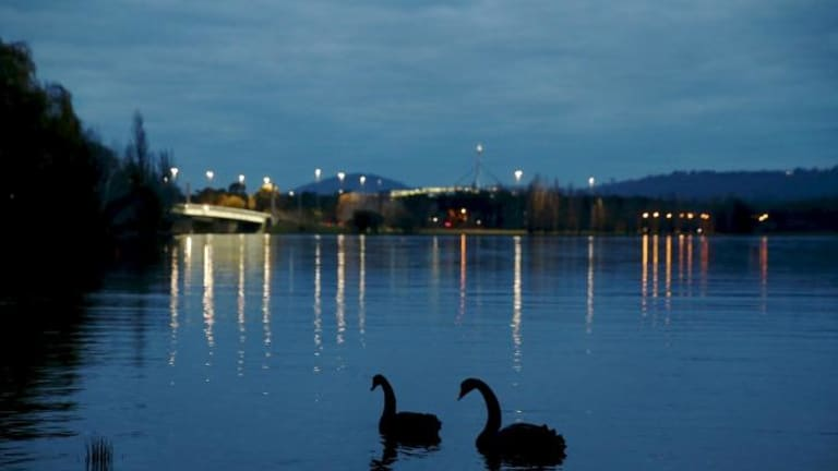Still waters: Swans on Lake Burley Griffin which hid the body of missing woman Irene Angley for 14 years.