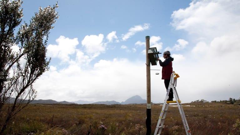 Wildlife biologist Shannon Troy checks a nest box at Melaleuca.
