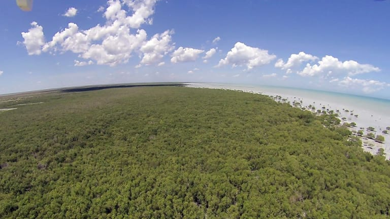Mangrove forest in the Roebuck Bay.