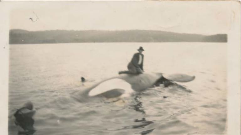 George Davidson on Old Tom's body in Twofold Bay on  September 17, 1930.