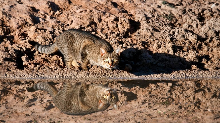The cull of feral cats will run until 2020.