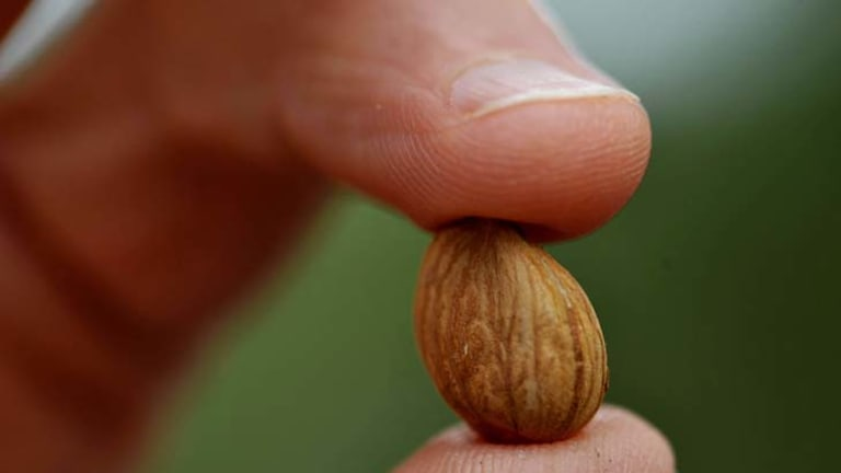 The kernel is the soft part inside the seed of the apricot. On average, each kernel contains about 0.5 mg of cyanide.