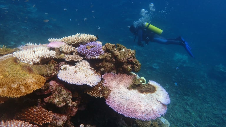 Bleaching corals display vivid fluorescent colours before turning completely white.