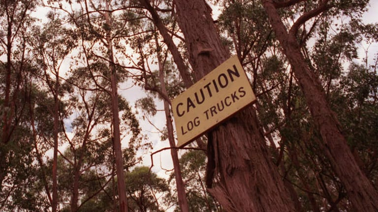 Logging in Leadbeater's possum habitat in Victoria is just one of many activities that have sparked criticism of VicForests.