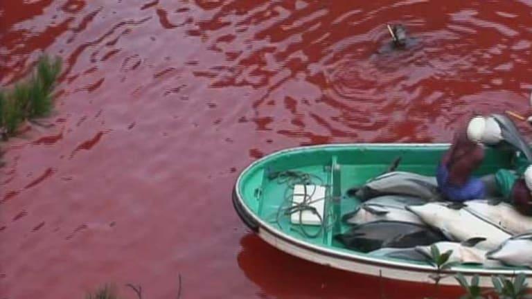 US ambassador intervenes in Taiji Cove dolphin hunt