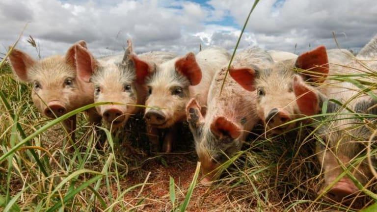 Farmers Split On Benefits Of Japan Australia Free Trade Deal
