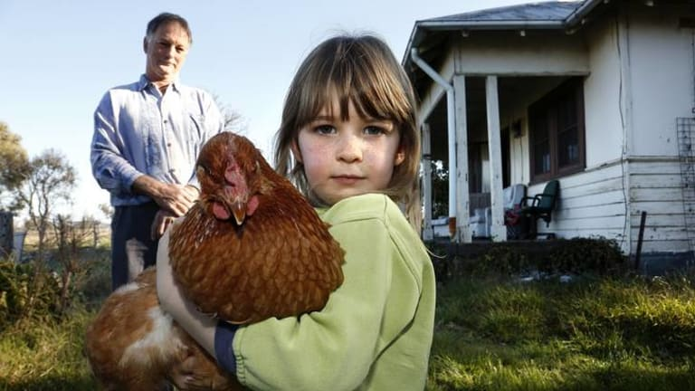 Andrew Collins watches daughter Grace Rutherford-Collins 5 with Blondie the chicken.