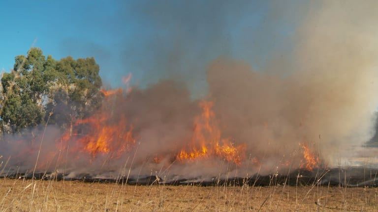 A grassland restoration burn in the Ginninderra catchment and more are slated for 15 sites around the area.