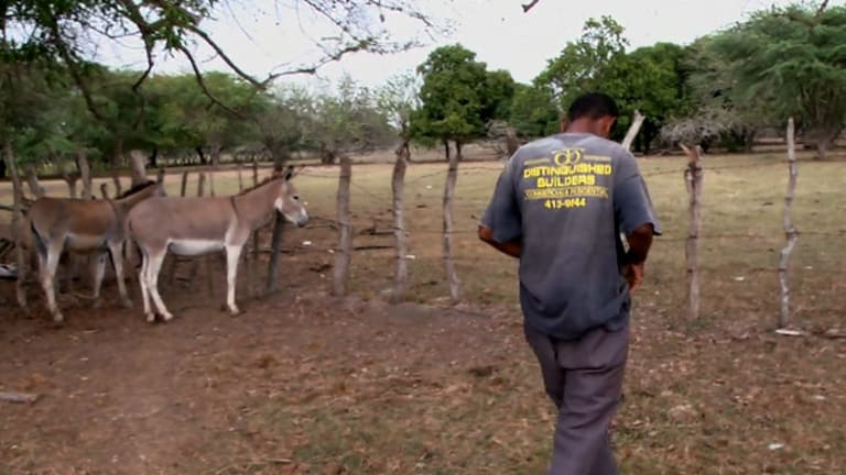 A man approaches a donkey prior to engaging in bestiality ... still from Donkey Love