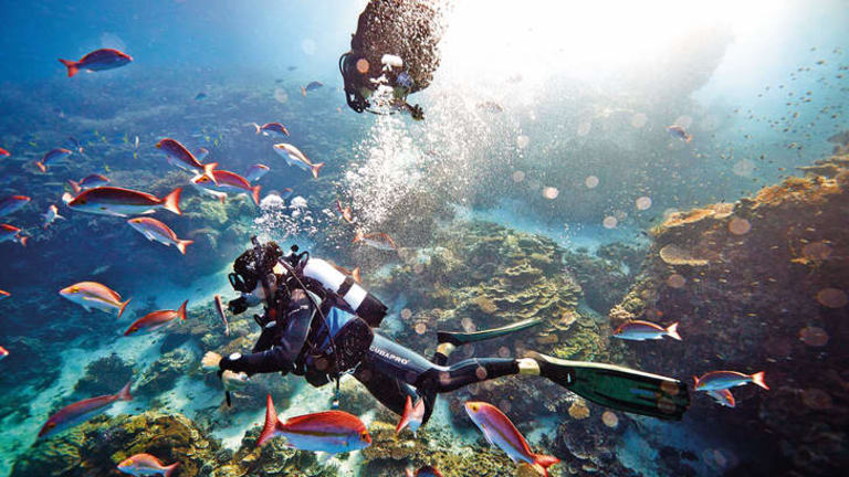 """""""A war is being conducted against nature on our reef."""""""