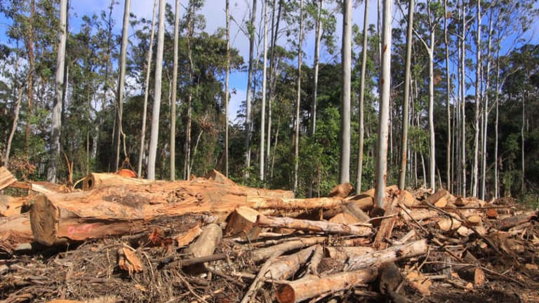 Taxpayers are losing money on native forest logging in NSW.