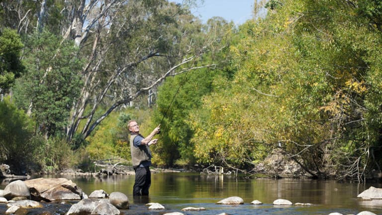 Fred Pizzini fly fishing on the King River.