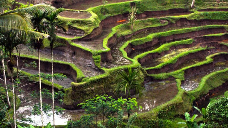Stairway to heaven … rice terraces just outside Ubud, a Balinese tourist destination that swaps swim-up bars for navel gazing.