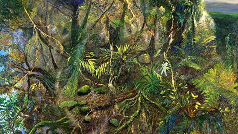 New phase ... plants and the undergrowth loom large in William Robinson's <em>Afternoon Light Springbrook</em> (2011).