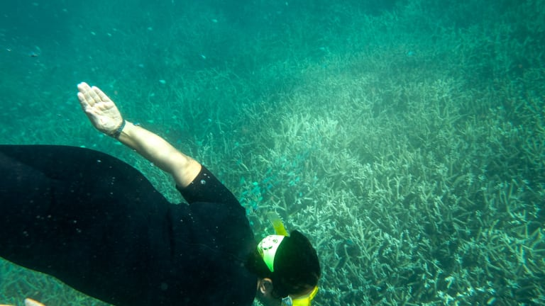 Experimental work conducted at the Great Barrier Reef indicates that increased stress from ocean acidification is contributing to coral bleaching.