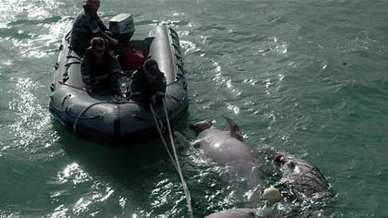 Four dugong were caught in nets off Cairns.